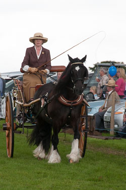 Holsworthy Show, August 2012